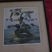 Golden Eye  White Winged Scoter Waterfowl Litho, Lynn Bogue Hunt