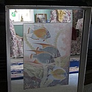 """Bermuda Print 1950's, 16""""x21"""" Reef Fish, in Mirrored Mat and Frame"""