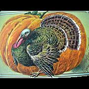 Thanksgiving Incised Greeting Postcard Large Turkey Large Pupmkin