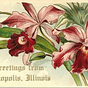 Orchid Postcard with Greetings from Annapolis, Illinois