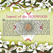 SOLD Legend of the Dogwood Vintage Postcard