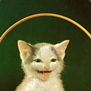 Happy Kitten in a Basket Postcard