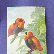 Vintage Cock of the Rock Postcard from Europe