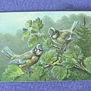 European Blue Titmouse Postcard