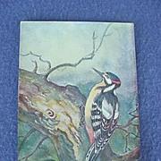 European Woodpecker Postcard
