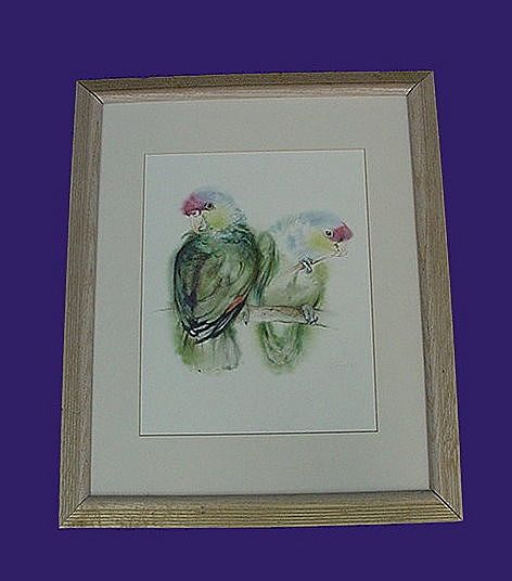 Framed Lilac Crown Amazon Print