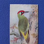 Vintage Roland Green Green Woodpecker Postcard