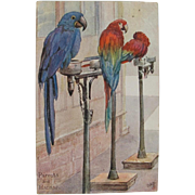 Early 1900s Tucks Macaw Parrot Postcard