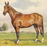 Beautiful Horse - Artist Signed Alderson