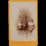 SOLD Antique CDV Photograph ~ Cat With Bird Friend