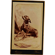 SOLD French CDV Photograph Of A Sweet Dog