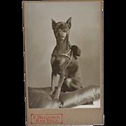 SOLD Antique Doc CDV Photograph ~ Miniature Pinscher