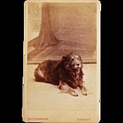 SOLD Antique CDV Dog Photograph