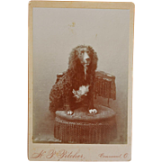 SOLD Antique Cabinet Dog Photograph ~ Beautiful Spaniel