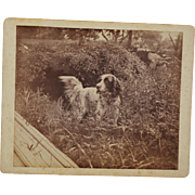 SALE Antique Hunting Dog Photograph