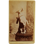 SOLD Antique CDV Photograph ~ Begging Dog With Bow