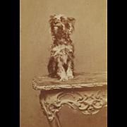 SOLD Antique CDV Dog Photograph ~ Yorkshire Terrier