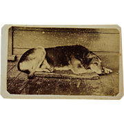 SOLD Antique CDV Photograph ~ Sleeping Old Dog
