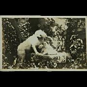 Antique AZO RPPC Dog & Pups Postcard