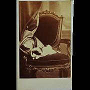 Antique CDV Sleeping Dog Photograph