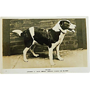"""Peter Of Stafford"" Daily Mirror Gugnunc Collar For Brave Dogs Postcard"
