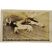 SALE U.S.S. California Goat & Dog Mascot AZO RPPC Postcard C1924