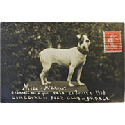 SALE Antique French RPPC Postcard ~ Fox Terrier Dog C1908