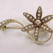 Nouveau DAISY Flower Pin 14k Gold Seed Pearl & Mine Cut Diamond
