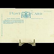 Hawaii and South Seas Curio Co. Vintage Post Card of Shark Fishing