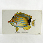 Hawaii and South Seas Curio Company Fishes of Hawaii Post Card