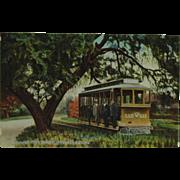 San Antonio Old Tree River Avenue Post Card