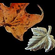 BG8 TIFFANY & CO Vintage Sterling Silver Maple Leaf Brooch Pin