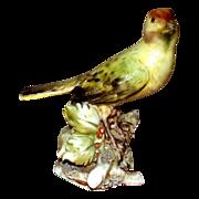 REDUCED Borsato - Bullfinch - Small Treasure!