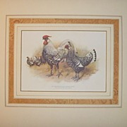 Antique Chromolithograph from the POULTRY BOOK 1905