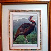 SALE PENDING Antique Chromolithograph of a Turkey