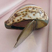 Victorian Cowrie Shell Snuff Box