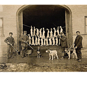 Early Hunting Photograph (ID-'d) 3 Hounds, 21 Dead White Rabbits c1915
