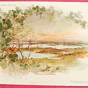 SOLD Extra Large Victorian Trade Card - National Flower Series - Ireland