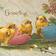 Easter Post Card Chicks Hatching Colored Eggs and Pussy Willows