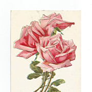 Post Card Pink Roses Embossed with Gold Gilt