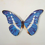 Butterflies Lithographs set of 4