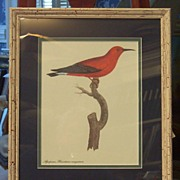 Bird Botanical Lithograph Framed Art