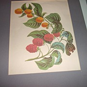 Botanical Fruit Berries