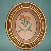 Antique Botanical in Gilded Oval Frame