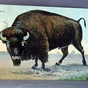 1911 Buffalo New York Post Card