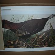 Vintage Set of Audubon Bird Prints in Original Box
