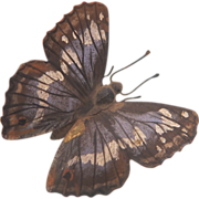 SOLD Vienna Bronze figure of a blue and white butterfly, , early 20th century