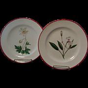 Pair Antique early 19th century English Creamware Botanical Plates 1810