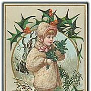 """""""Holly""""  (1910')"""