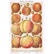Peaches and Apricots : Decorative Chromo Lithograph from 1902
